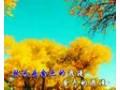 新疆原创歌曲《金秋》 (1173播放)