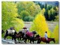 新疆人文 (6)