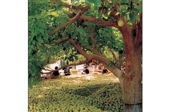 新疆果树全国人可均分一株 收入占新疆农民两成
