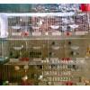 养殖笼具厂供应兔子笼鸽子笼狐狸笼鹌鹑笼鸡笼貉笼鸡鸽兔笼宠物笼