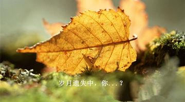 2009091522481383_副本