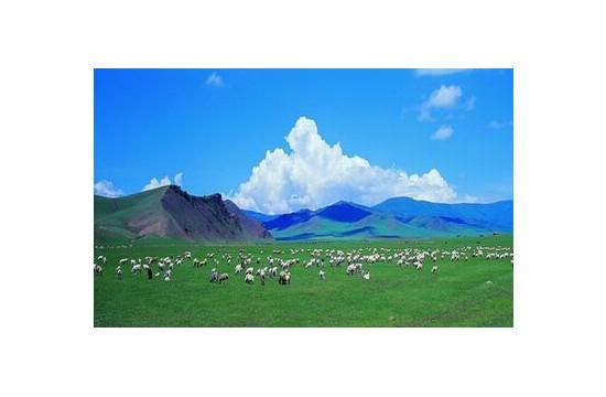 新疆力争2015年实现5.5亿亩基本草原划定面积